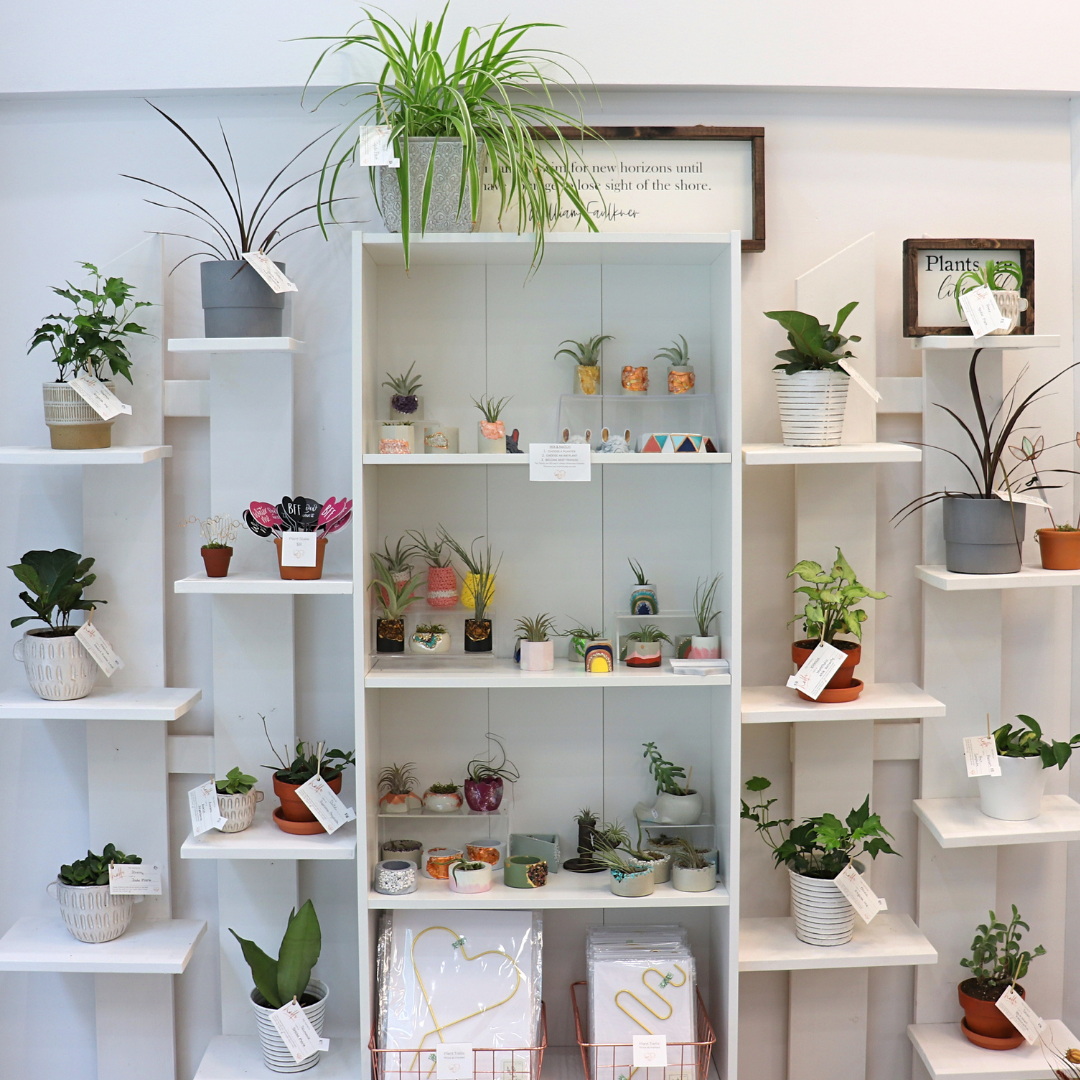 A shelf full of plants available at Drops of Gratitude